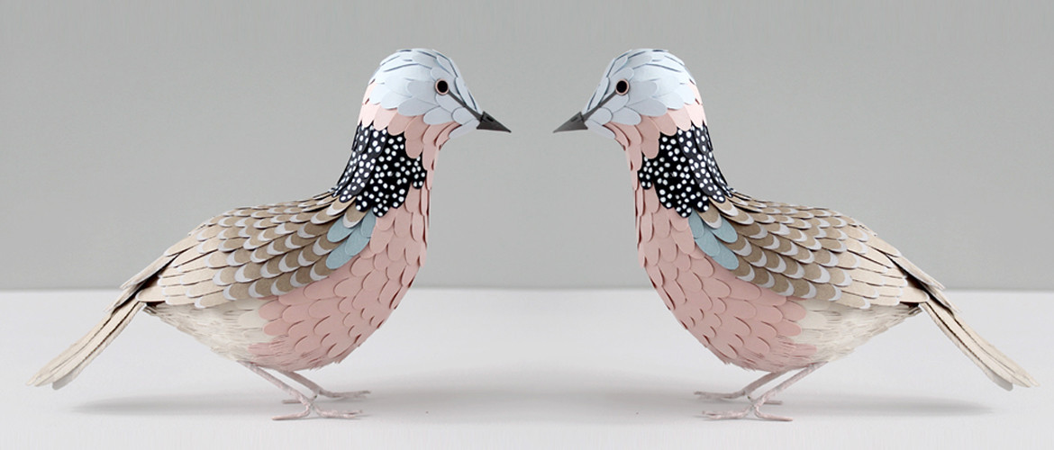 Spotted-Doves-Website-Slider